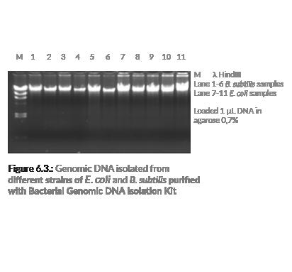 genomisk dna